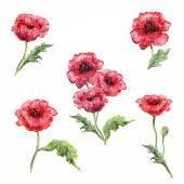 Set of poppies — Stock Vector