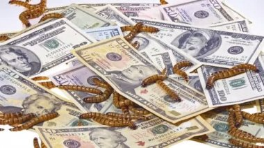 Economic crisis concept with money and worms — Stock Video