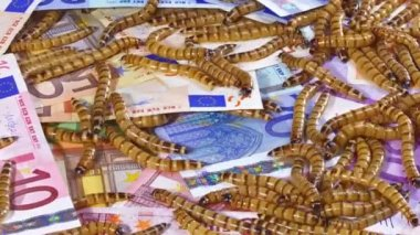 Big ugly worms crawling over euro banknotes background, — Stock Video