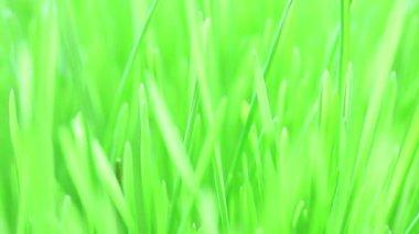 Flight over fresh new green grass — Stock Video
