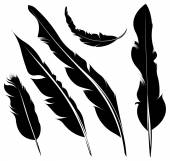 Silhouette of feathers — Stock Vector