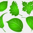Set of six green leafs — Stock Vector #65077119