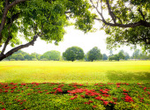 Green park with fresh grass — Stock Photo