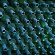 Rows of many empty wine bottles — Stock Photo #52044601