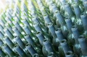 Rows of many empty wine bottles — Stock Photo