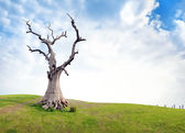 Old dead tree on green meadow — Stock Photo