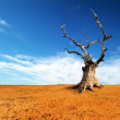 Dead tree in desert — Stock Photo #52893775