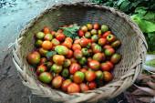 Small organic tomatoes — Stock Photo