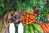 Różne warzywa świeże — Zdjęcie stockowe