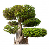 Old big tree with green foliage — Stock Photo