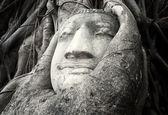 老树佛石雕 — 图库照片