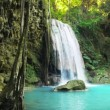 Waterfall falling in pond in jungle rainforest — Stock Video #75253093