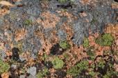 Glacial granite rocks covered with moss and lichen at the top of Cadillac Mountain in Northern Maine — Stock Photo