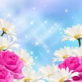 Flores y estrellas — Foto de Stock