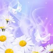 Daisy ve büyü kelebek — Stok fotoğraf