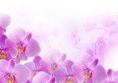 Orchids — Foto Stock