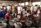 Sorteren van verse squid in manden — Stockfoto