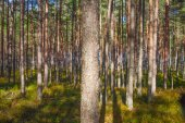 Sunlight in forest. — Stock Photo