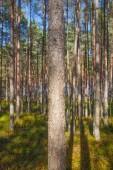 Zonlicht in bos. — Stockfoto