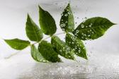 Green leaf. — Stock Photo