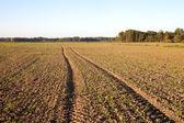 Fresh canola field. — Stock Photo