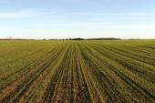 Green field in springtime. — Stock Photo