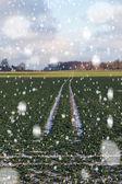 Blizzard on wheat field. — Stock Photo