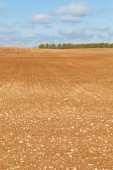 Brown field. — Stock Photo
