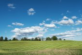 Mowed agricultural field. — Stock Photo