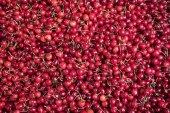 Red cherries. — Stock Photo