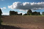 New field. — Stock Photo