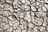 Cracked soil. — Stock Photo