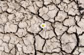 Flower in cracked soil. — Stock Photo
