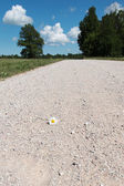 Single flower on country road. — Stock Photo