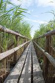 Wooden footbridge. — Stock Photo