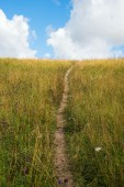 Path in grass. — Stock Photo