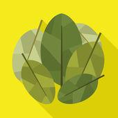 Coca leaves icon — Stock Vector