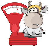 Cow on weighing scale. — Stock Vector