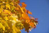 Autumn yellow leaves — Stock Photo