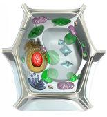 Plant cell diagram — Stock Photo