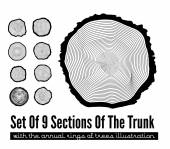 Cross section of the trunk — Stock Vector