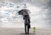 Businessman with umbrella protecting sprout — Stok fotoğraf