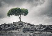 Drzewo stojące na ruiny — Zdjęcie stockowe