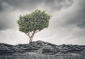 Green tree standing on ruins — Stock Photo