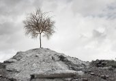 Dry tree on ruins — Stock Photo