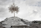 Dry tree on ruins — Stock Photo