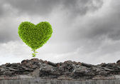 Green heart growing on ruins — Stock Photo