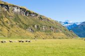 New Zealand alps and meadows — Stockfoto