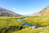 New Zealand alps and stream — Photo