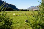 New Zealand alps and meadows — Stock Photo